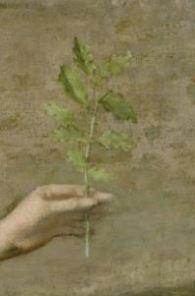 Olive branch, detail